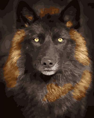 Картина по номерам 40x50 Чёрный волк в рыжих подпалинах