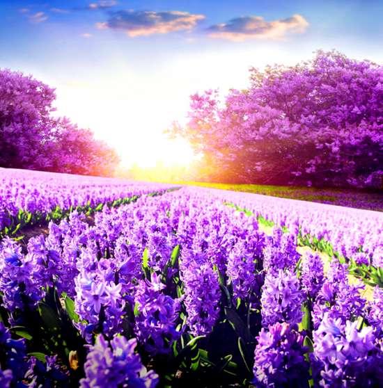Картина по номерам 40x50 Сиреневые цветы